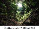 Sun Shining Through Trees In A...