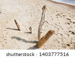Dried Wood Branches On Sandy...