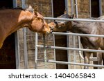 Two horses interact with each other through the fence in Hayden, Idaho.