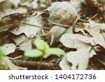 Stock photo snail macro view snail view snail nature scene snail photo 1404172736