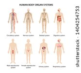 set of eight systems of organs... | Shutterstock .eps vector #1404254753