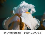 spring spirit  close up of... | Shutterstock . vector #1404269786