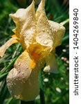 spring spirit  close up of... | Shutterstock . vector #1404269840