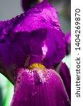spring spirit  macro part of... | Shutterstock . vector #1404269870