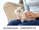 Stock photo woman with cute funny kitten at home 1404294173