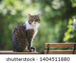 side view of a tabby white... | Shutterstock . vector #1404511880