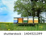 Colorful Hives Of Bees In...