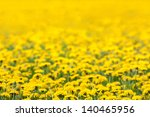 Spring Background Of Yellow...