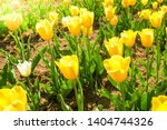 amazing view of colorful yellow ... | Shutterstock . vector #1404744326
