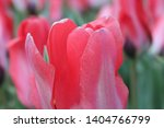 extreme close up of a bright... | Shutterstock . vector #1404766799