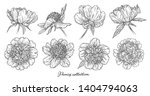 peony flowers set hand drawn in ... | Shutterstock . vector #1404794063