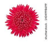 gerbera daisy flower  gerbera... | Shutterstock . vector #1404998699