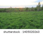 field with grass and forest in...   Shutterstock . vector #1405020263