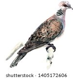 Turtle Dove On A Branch Of...