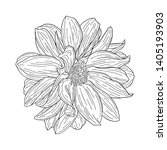 dahlia ink sketch. isolated on... | Shutterstock .eps vector #1405193903