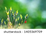 beautiful large clean  droplets ...   Shutterstock . vector #1405369709