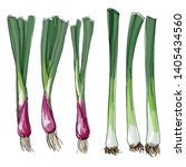 sketch of food. bunching onions ... | Shutterstock .eps vector #1405434560