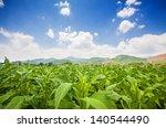 tobacco field under blue sky   Shutterstock . vector #140544490