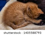 Stock photo orange tabby kitten cuddles with a black kitten both are weeks old 1405588793
