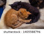 Stock photo orange tabby kitten cuddles with a black kitten both are weeks old 1405588796