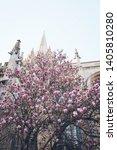 Oxford Oxfordshire Magnolias Uk ...