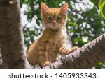 Stock photo ginger kitten sitting on a tree branch on a sunny summer day the kitten looks into the camera 1405933343