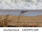 mediterranean gull or black...   Shutterstock . vector #1405991189