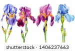 Set Of Beautiful Flowers Irises ...
