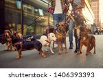 Stock photo group of dog walking on leash with couple professional dog walker on the street 1406393393