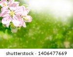 blossoming branch apple. bright ... | Shutterstock . vector #1406477669