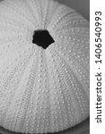Textured Urchin Symbol Of Sea...