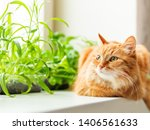 Cute Ginger Cat Is Sitting On...