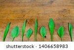 fresh plantain wild herbs... | Shutterstock . vector #1406658983