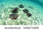 A Group Of Stingrays Swimming...