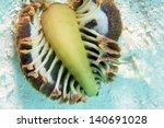 a soft coral  sea pens | Shutterstock . vector #140691028