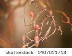 wild rose hips. rose hips in... | Shutterstock . vector #1407051713