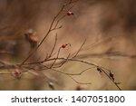 wild rose hips. rose hips in... | Shutterstock . vector #1407051800