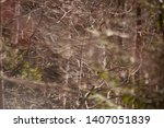 wild rose hips. rose hips in... | Shutterstock . vector #1407051839
