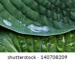 drops of rain on the green leaf | Shutterstock . vector #140708209