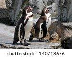 Humboldt Penguins Latin Name...