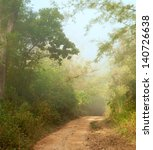 Misty Morning  In Jungle Near...