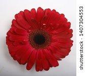 Red Gerbera Flower   Red...