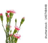 colored  flowers isolated on...   Shutterstock . vector #140748448