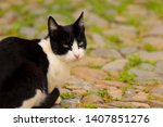 cute cat in a street | Shutterstock . vector #1407851276