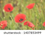 field with red poppies in spring | Shutterstock . vector #1407853499