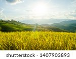 Landscape Of Gold Rice Fields....