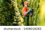 Hedge Trimming Job. Caucasian Gardener with Gasoline Hedge Trimmer Shaping Wall of Thujas in a Garden. - stock photo