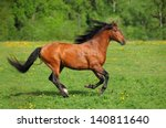 Stock photo beautiful bay horse running on the field 140811640