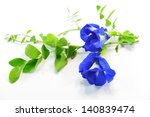 butterfly pea  isolated on... | Shutterstock . vector #140839474