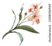 Watercolor Illustration   Plant ...